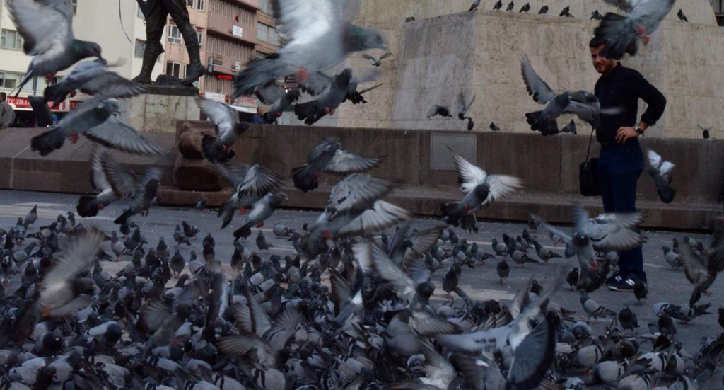 Ankara sightseeing: feeding the pigeons in Ulus, the beating heart of the city
