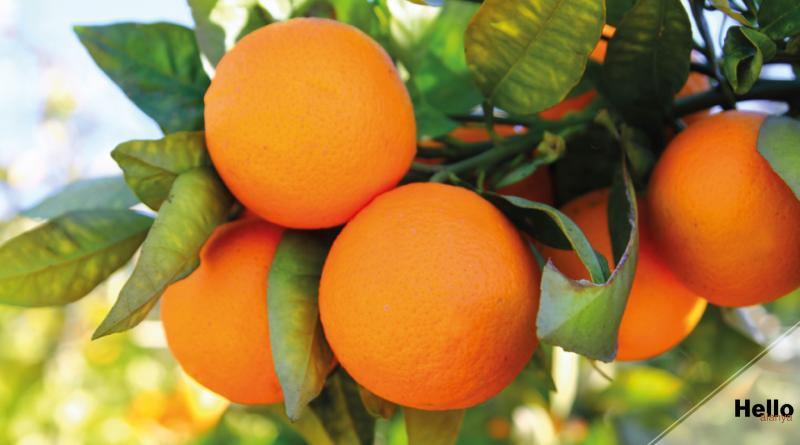 oranges from turkey, turkish oranges, washington oranges, alanya oranges,