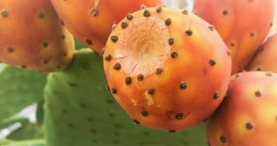 Handle with Care: Prickly but Healthy Cactus Fruits
