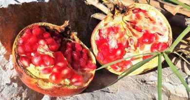 9 Things you need to know about the Pomegranate